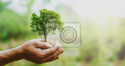 Poster hand holdig big tree growing on green background with sunshine