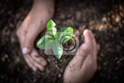 Poster Hand protects seedlings that are growing, Environment Earth Day In the hands of trees growing seedlings, reduce global warming, concept of love the world.