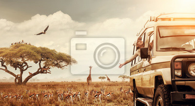 Poster Happy woman traveller on a safari in Africa, travels by car in Kenya and Tanzania, watches life wild tigers, giraffes, zebras and antelopes in the savannah.