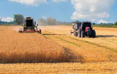 Poster Harvester kombinieren und Traktor Ernte Weizen auf sonnigen Sommertag