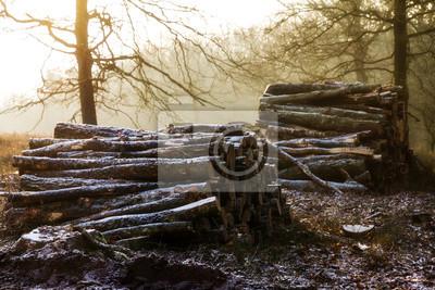 Haufen von Protokollen bei Sonnenaufgang an einem kalten Wintertag mit Schnee in der Luft am Posbank in den Niederlanden