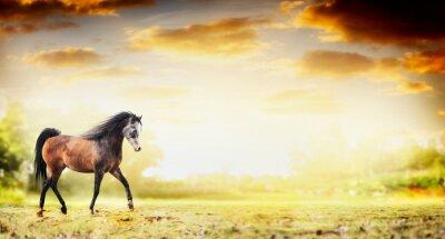 Poster Hengst Pferd laufen Trab über Herbst Natur Hintergrund, Banner