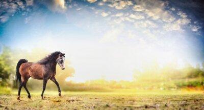 Poster Hengst Pferd laufen Trab über Natur Hintergrund mit schönen Himmel, Banner