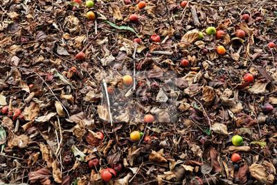 Poster Herbst Feld Hintergrund