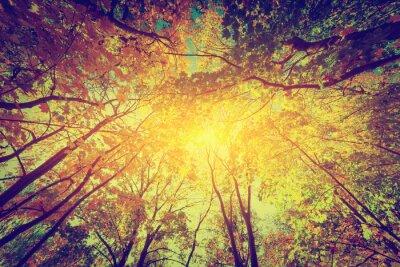 Poster Herbst, Herbst Bäume. Sonne scheint durch bunte Blätter. Jahrgang