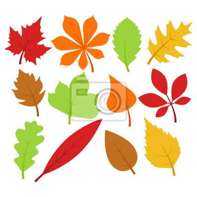 Herbst Herbst Blatter Sammlung Wandposter Poster Eiche Baum
