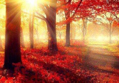 Poster Herbst-Szene. Schöne herbstlichen Park in der Sonne