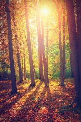 Poster Herbstlandschaft