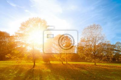 Poster Herbstlandschaft -ebenen Herbst Park im Herbst sonnigen Abend. Bunte Herbst Ansicht des Sonnenuntergangs Park mit Sonnenstrahlen.