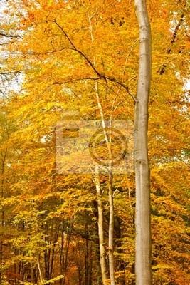 Herbstliche Wald bei Sonnenuntergang