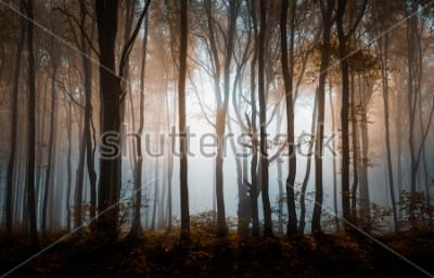 Poster Herbstnebeliger Wald. Balkan-Berge, Bulgarien.