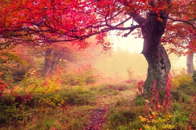 Poster Herbstwald