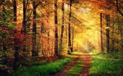 Poster Herbstwaldlandschaft mit Strahlen der warme Licht