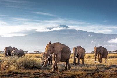 Poster Herd of African Elephants in Front of Kilimanjaro