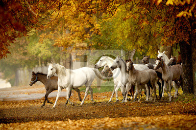 herd of horses on a rural road in autumn