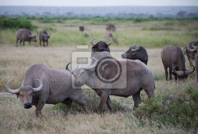 Herde von Büffel auf afrikanische Savanne