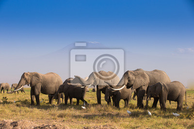 Herde von Elefanten Im Amboseli Nationalpark Kenia