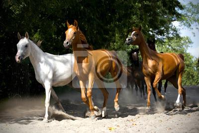 Herde von Pferden auf der Dorfstraße