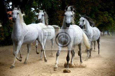 Herde von Pferden auf einer Landstraße laufen