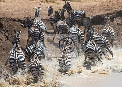 Herde von Zebras in Wasserloch in Kenia