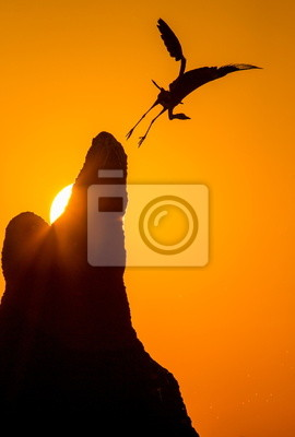 Heron startet bei Sonnenuntergang.
