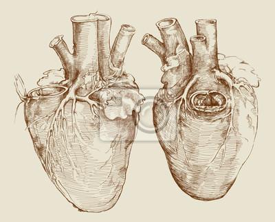 Herz. basierend auf zeichnung von leonardo da vinci wandposter ...