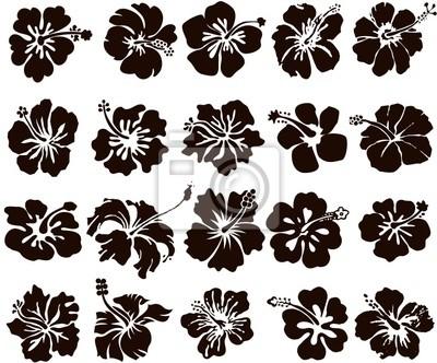 Hibiskus-Blume Silhouetten