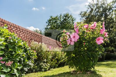 Hibiskus Im Garten Wandposter Poster Gebäude Gartenarbeit