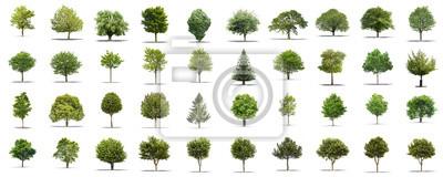 Poster High Definition Sammlung Baum isoliert auf weißem Hintergrund