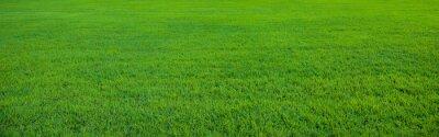 Poster Hintergrund der schönen grünen Gras Muster