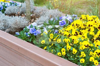 Hochbeet Mit Blumen Bepflanzt Wandposter Poster Pflanzer Abloom