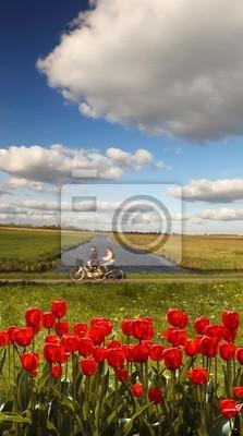 Holland Landschaft mit roten Tulpen gegen Biker