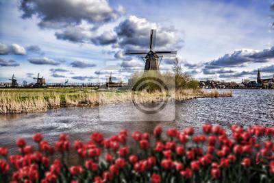 Holländische Windmühlen mit roten Tulpen in der Nähe von Amsterdam, Niederlande