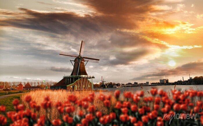 Poster Holländische Windmühlen mit roten Tulpen in der Nähe von Amsterdam, Niederlande