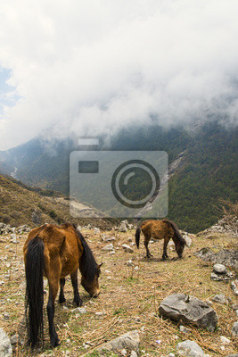 Horses feeding in cloudy mountains