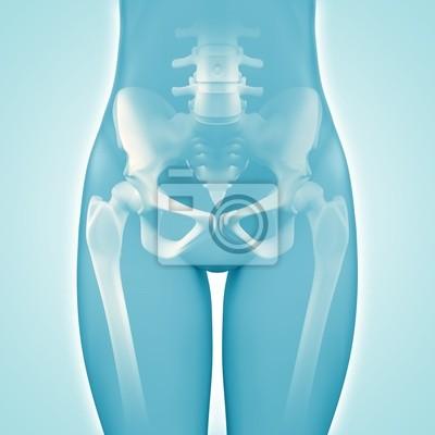 Hüfte - anatomie - 3d-grafik wandposter • poster anatomisch ...