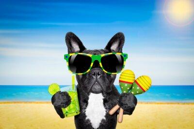 Poster Hund Sommer-Strand-Cocktail