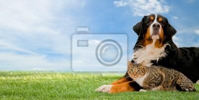 Hunde-und Katzen-Freunde zusammen auf Gras