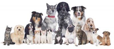 Poster Hunde und Katzen Gruppe