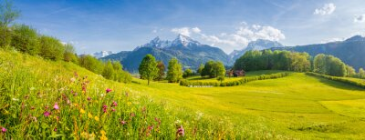 Poster Idyllic mountain scenery in the Alps with blooming meadows in springtime