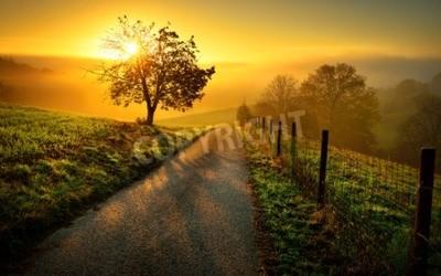 Poster Idyllische ländliche Landschaft auf einem Hügel mit einem Baum auf einer Wiese bei Sonnenaufgang, führt ein Weg in das warme goldene Licht