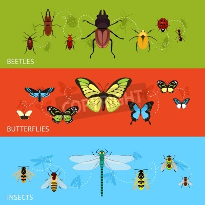Insekten Farbig Banner Wohnung Mit Kafer Und Schmetterlinge