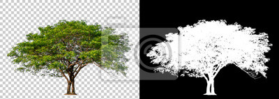 Poster Isolated single tree with clipping path and alpha channel on a transparent picture background. Big tree large image is easy to use and suitable for all types of art work and print.