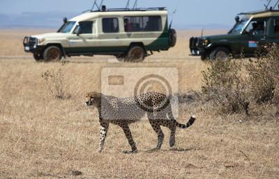 Jeep-Safari in der Masai Mara Nationalpark Kenia