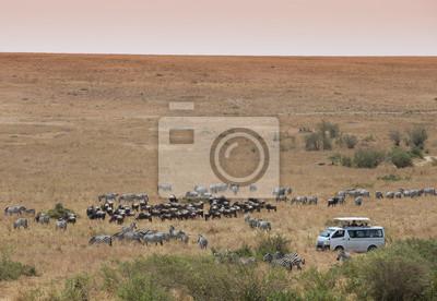 Jeep-Safari in Masai Mara Kenia
