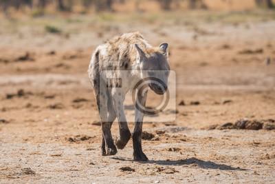 Junge beschmutzte Hyänenporträt