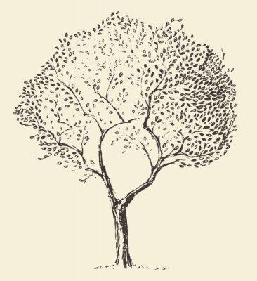 Poster Junge Olivenbaum Abbildung Vektor Hand gezeichnet
