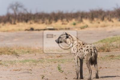 Junges beschmutztes Hyänenprofil