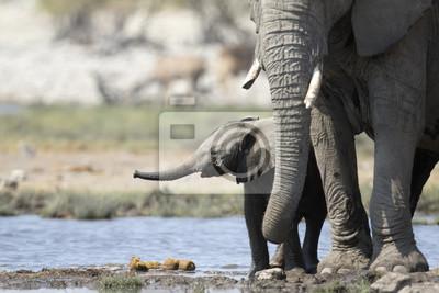 Junges Elefantenkalb an einem Wasserloch