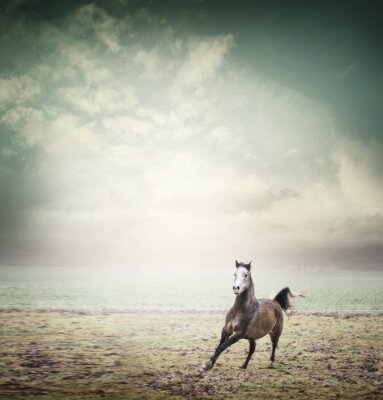 Poster Junges Pferd läuft auf Weide und Himmel Hintergrund, getönten